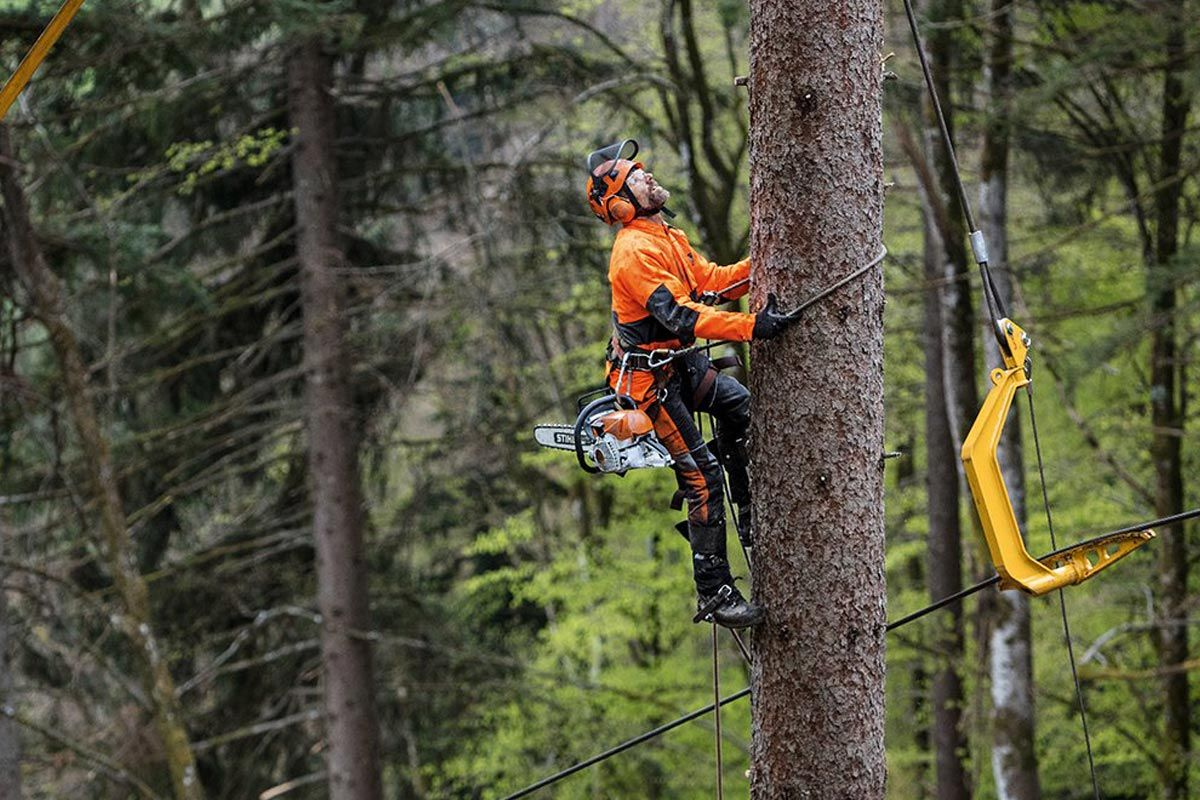 Three Ways to Help Your Tree Care Business Make It During A Slow Season