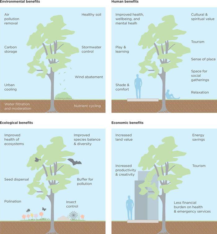 Benefits of trees in cities