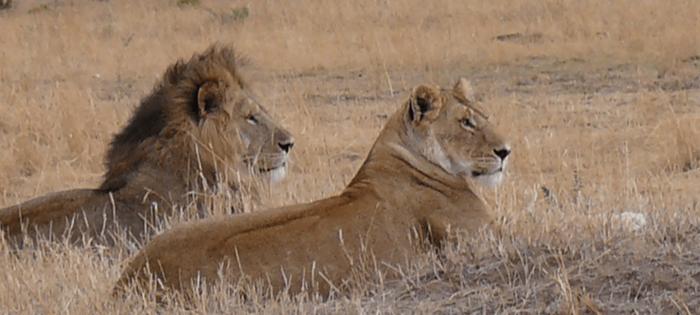 Los reyes descansan - Foto cedida por mi amigo Manel