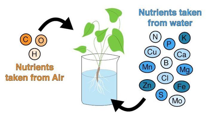 Plants obtain 3 nutrients from the air–carbon, hydrogen, and oxygen–and 13 nutrients from supplemented water: nitrogen, phosphorous, potassium, calcium, magnesium, sulphur, iron, manganese, copper, zinc, boron, chlorine, and molybdate.