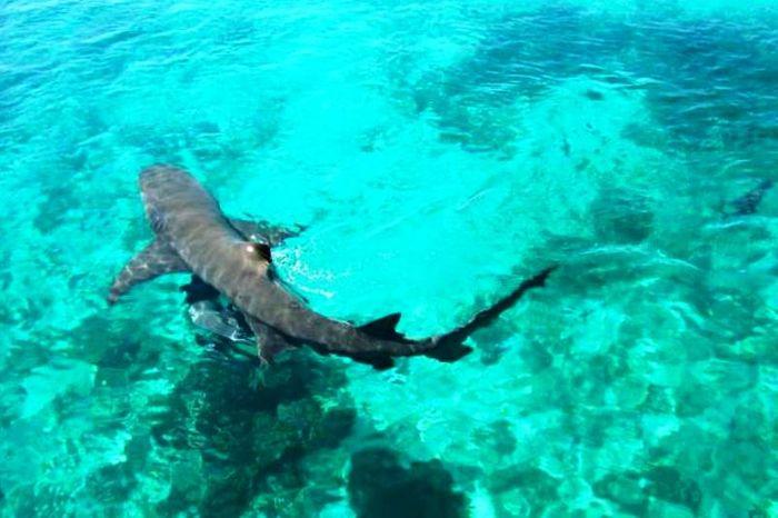 Акула на плаже острова Майорка