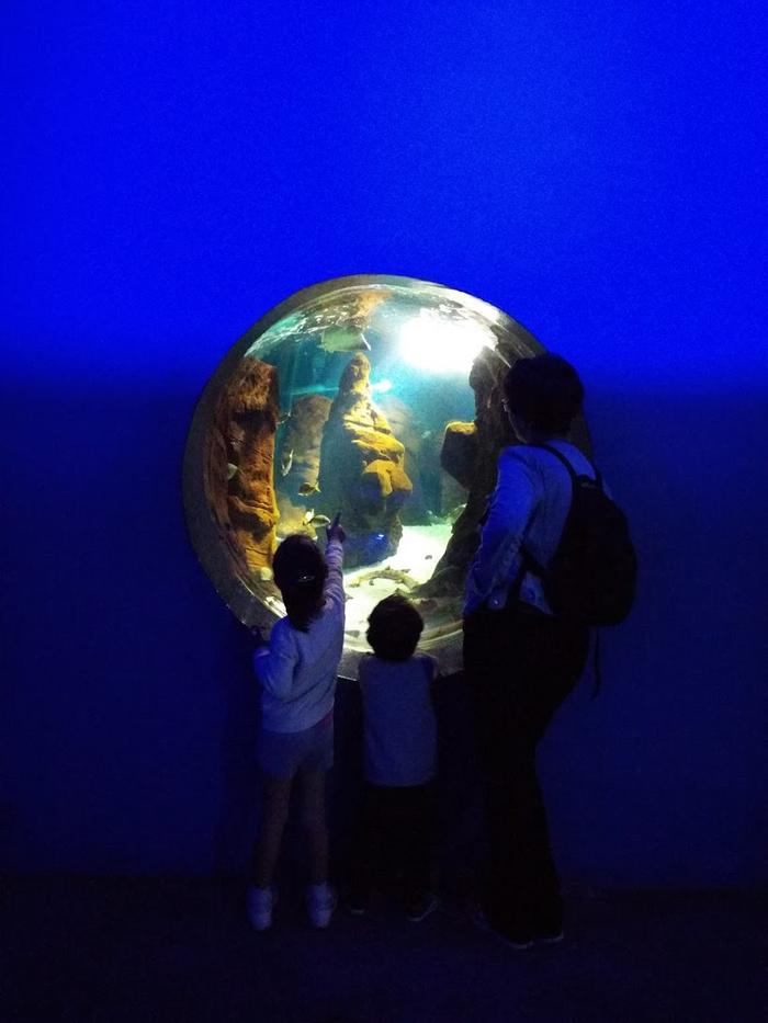 Aquarium de Costa Teguise