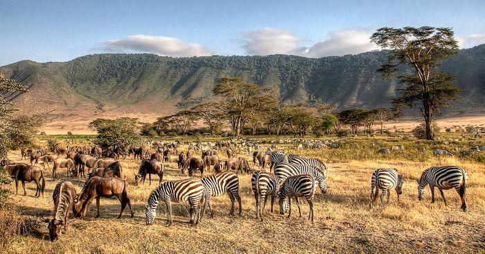 Танзанія, що є одним із головних туристичних центрів у Африці, пропонує відвідувачам незабутні враження від природних пам'яток та сафарі